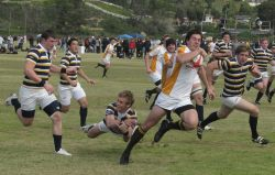 Cal Rugby in hot pursuit